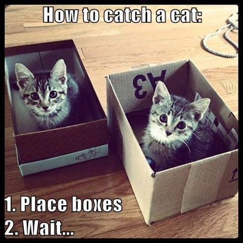 How To Catch A Cat Crazy Cats Cat Traps Cats