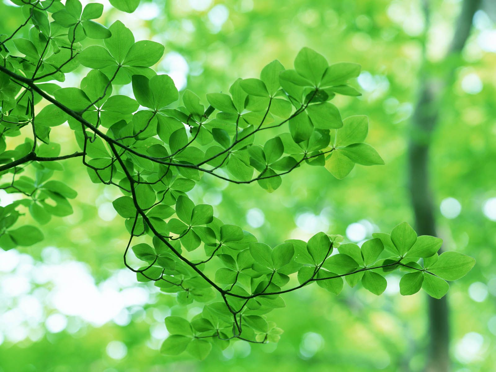 light green flower wallpaper -#main