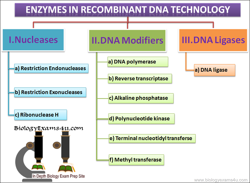 history of dna sequencing biology essay Biology revision home  history of dna sequencing   the dna for sequencing is mixed with a primer, dna polymerase, .