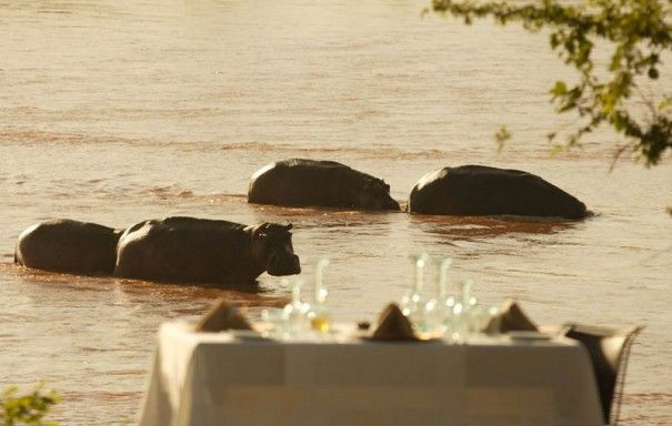 how cool would it be to sit at this table and watch these amazing creatures??