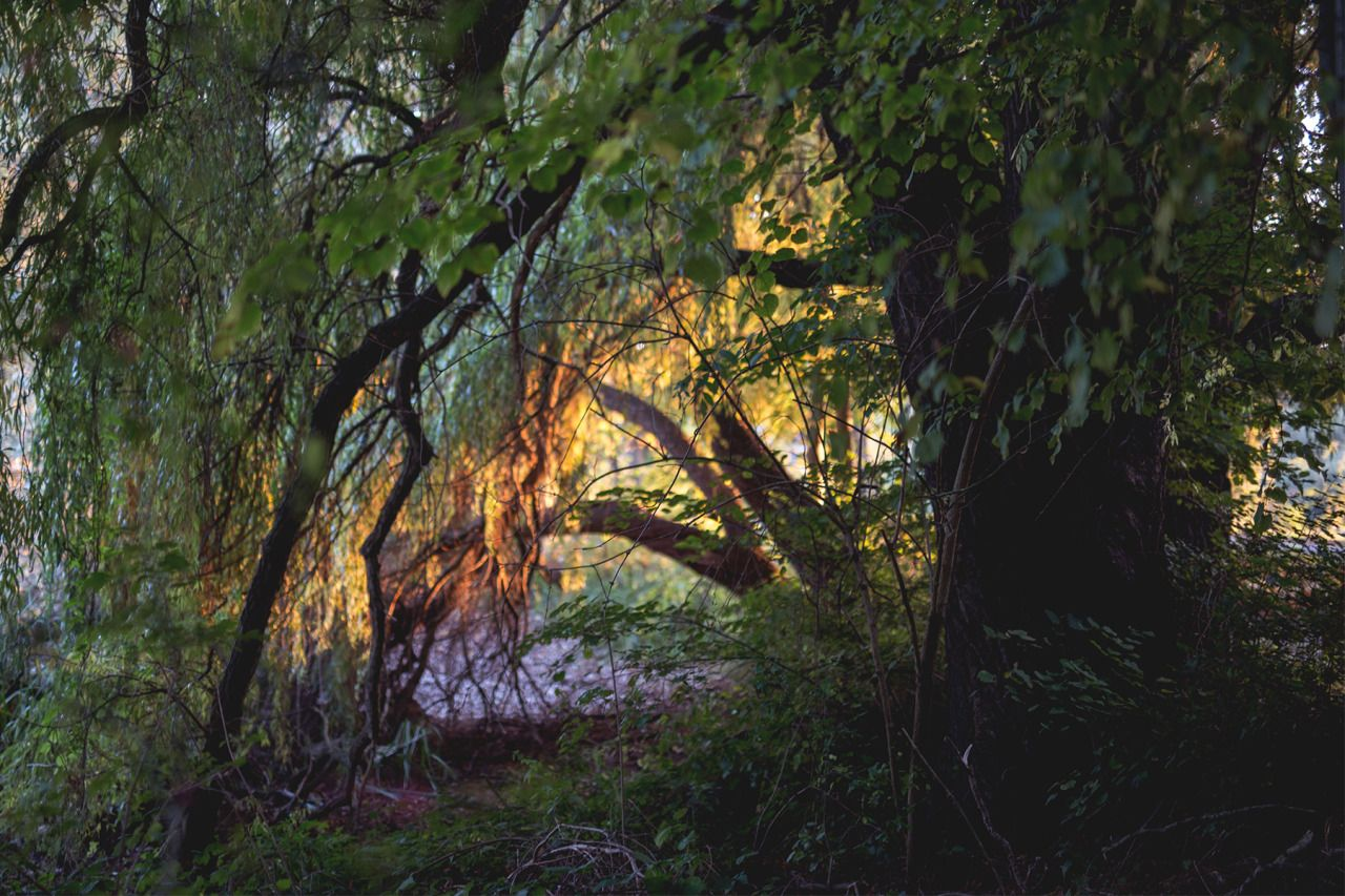 Autumn light and colors - #braunschweig #fotografie #landscape #lensblr #on #original #photographers #tumblr