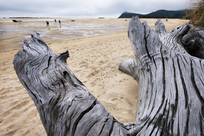 Well-bleached ancient limbs frame the beach at the restored Awaroa homestead in Abel Tasman.