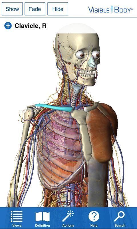 Visible Body 3d Anatomy Atlas Imgenes 1 Anatomia Humana
