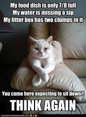 funny animal pictures of the day 25 pics this cat really wants a home description from pinterest com i searched for this on bing com images