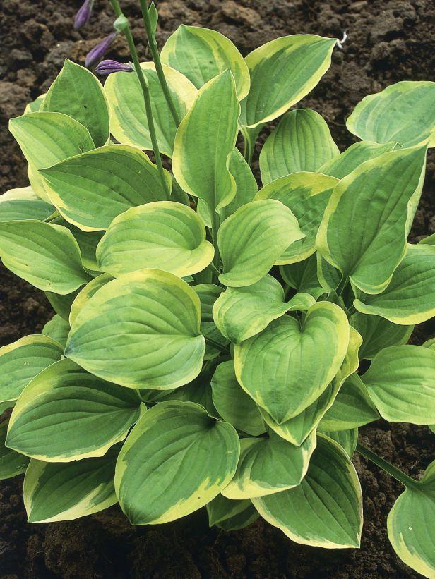 Fertilizing 101 --> http://www.hgtvgardens.com/garden-basics/fertilizing-101-the-best-plant-foods?soc=pinterest