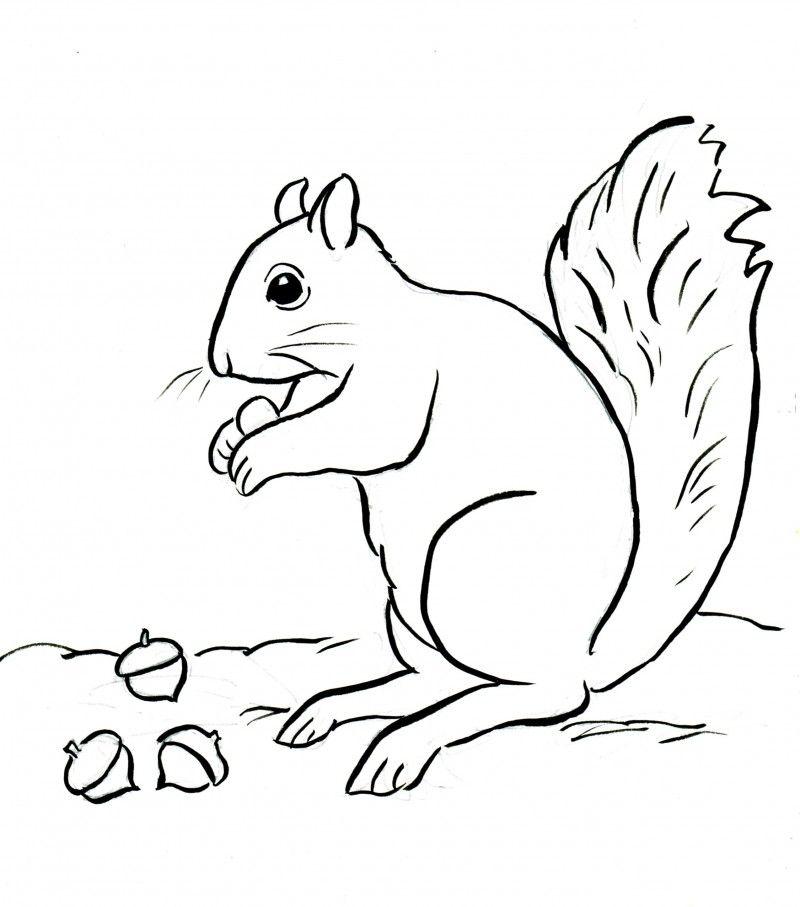 Dibujos de ardillas | Animales | Pinterest | Ardilla, Dibujos de y ...
