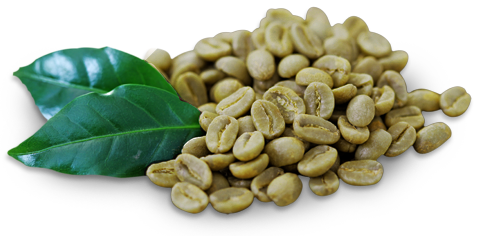 Green Coffee Arogyaamrut Green Coffee Bean Green Coffee Bean Extract Diet Organic Coffee Beans