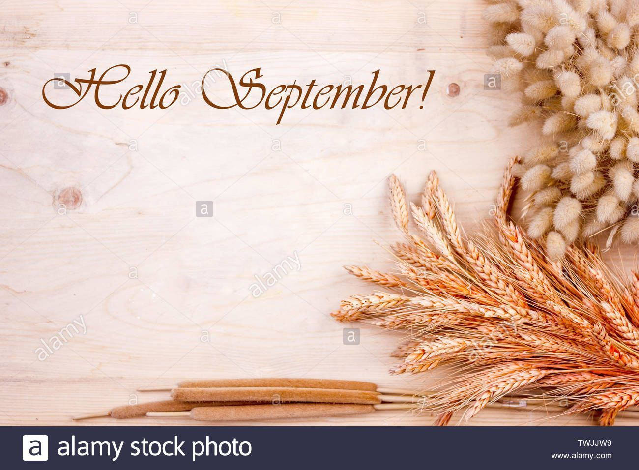 Download this stock image: Dried grain ears and reeds on wooden table. Autumn harvest of bread. Lettering Hello September - TWJJW9 from Alamy's library of millions of high resolution stock photos, illustrations and vectors. #helloseptember Download this stock image: Dried grain ears and reeds on wooden table. Autumn harvest of bread. Lettering Hello September - TWJJW9 from Alamy's library of millions of high resolution stock photos, illustrations and vectors. #helloseptember Download this stock #helloseptember