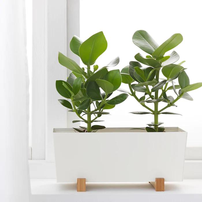 IKEA - BITTERGURKA Plant pot, white -   19 diy Interieur plants ideas