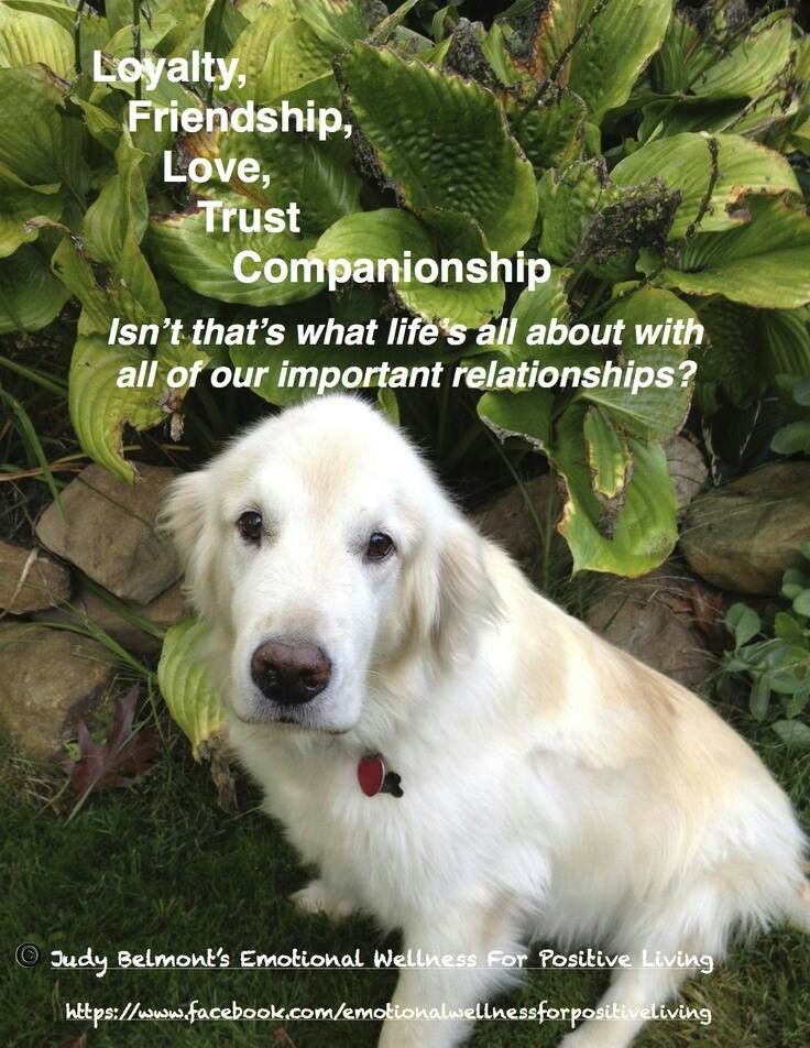 Loyalty Friendship Love Trust Companionship I Love Dogs Dog