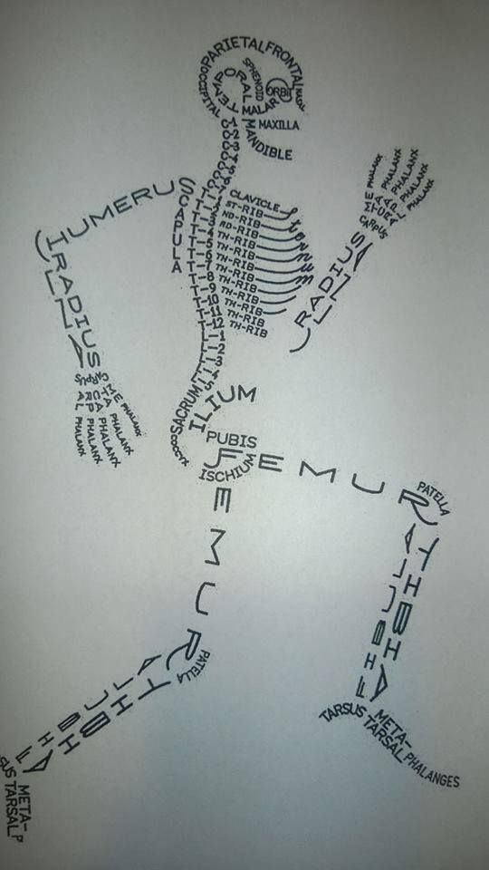 A bone-afide way to remember the parts of the human skeleton