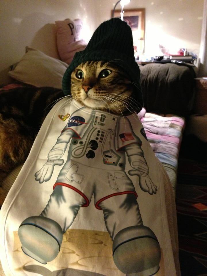 Astro cats
