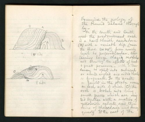 nemfrog Pages from a naturalistu0027s notebook Field notes, 1871 - field note
