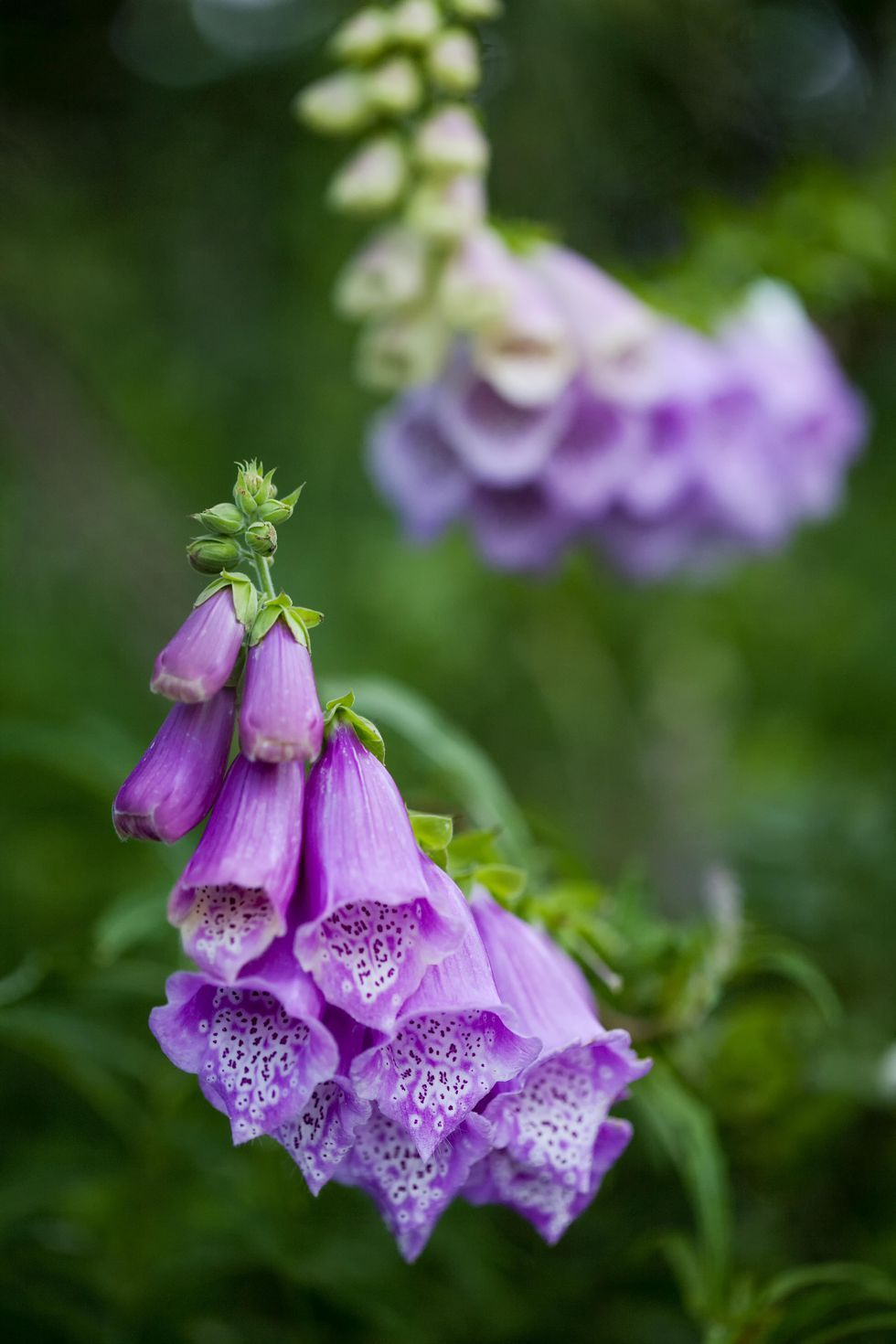 These Pretty Purple Flowers Go Way Beyond Lavender and