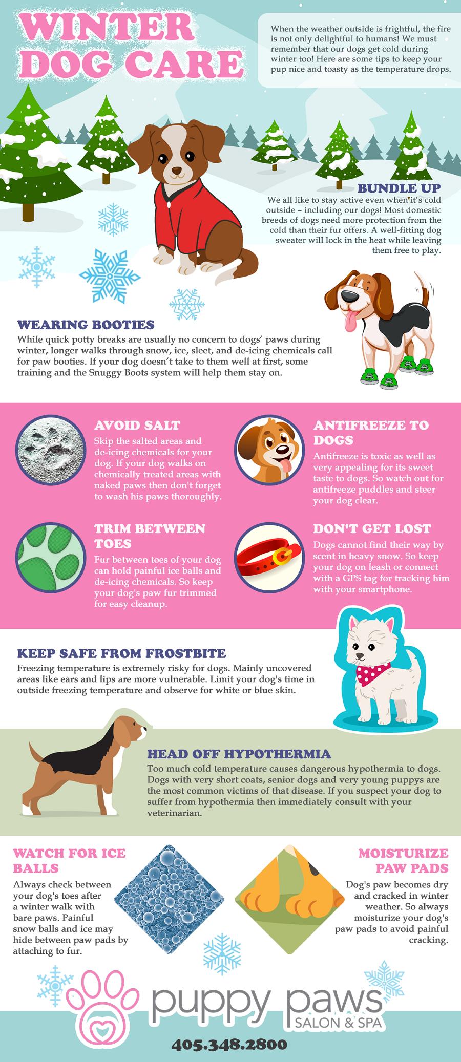 Winter Dog Care Tips Dog Care Tips Dog Care Winter Dog