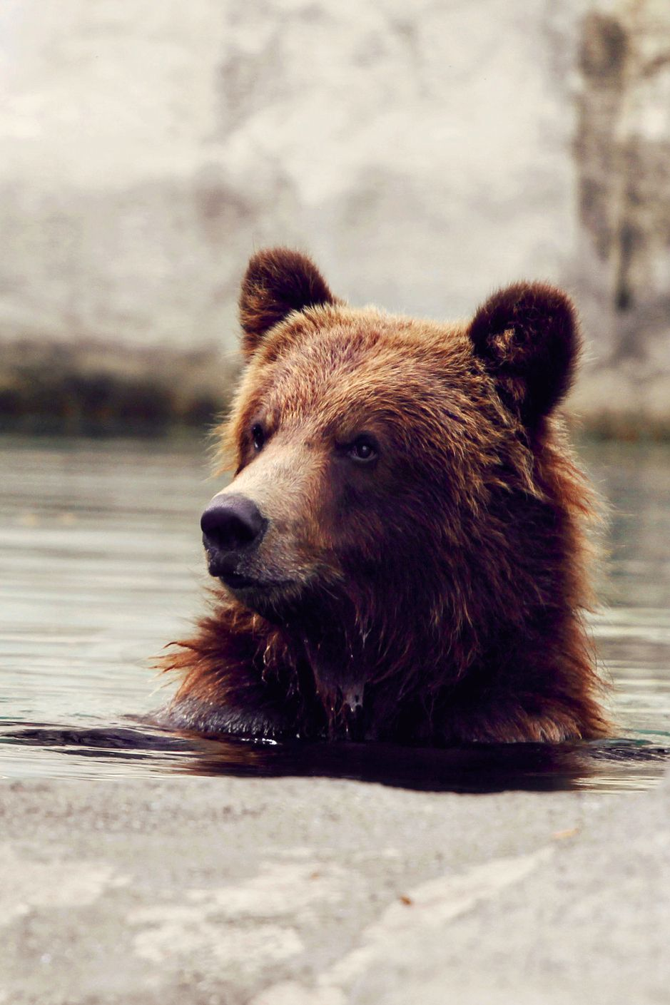 Favorite animals grizzly bear | Animals | Pinterest | Animales locos ...