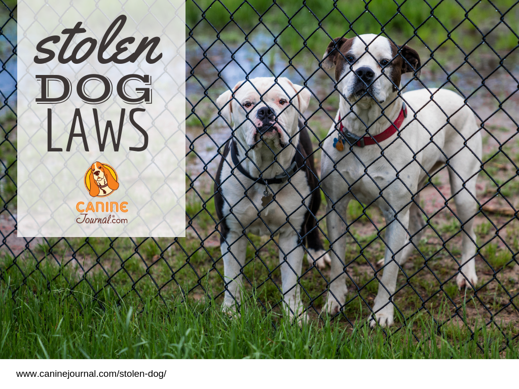 The Alarming State Of Stolen Dog Laws How To Prevent Dogs Dog