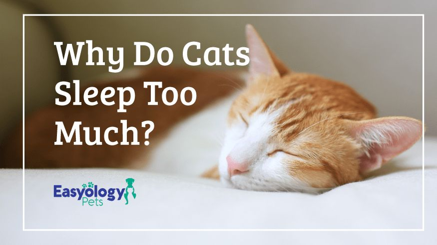 Why Do Cats Sleep Too Much? Cat sleeping, Cats, Cat