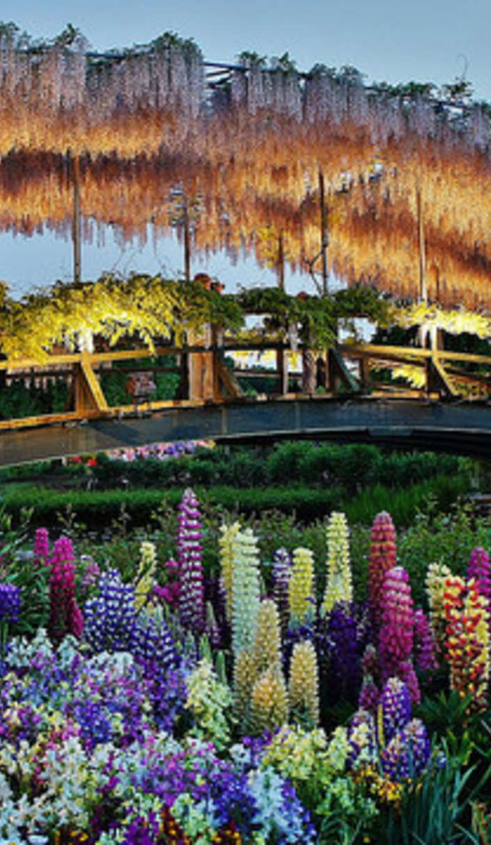 The Worlds Most Beautiful Flower Garden Is Absolutely Mesmerizing