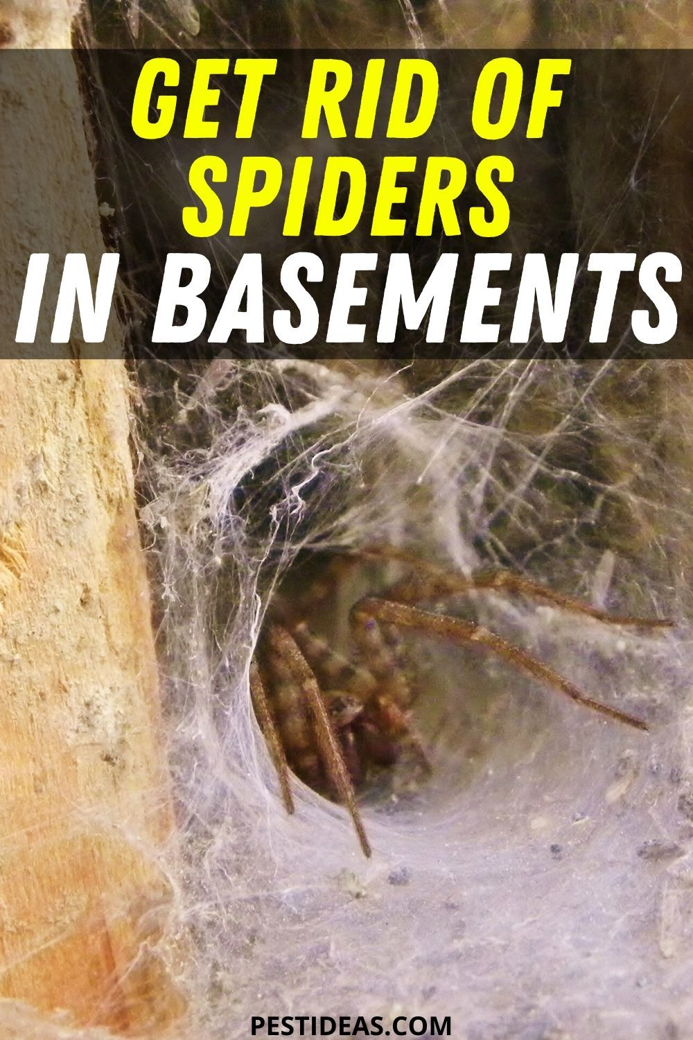 Pin on Get Rid of Spiders