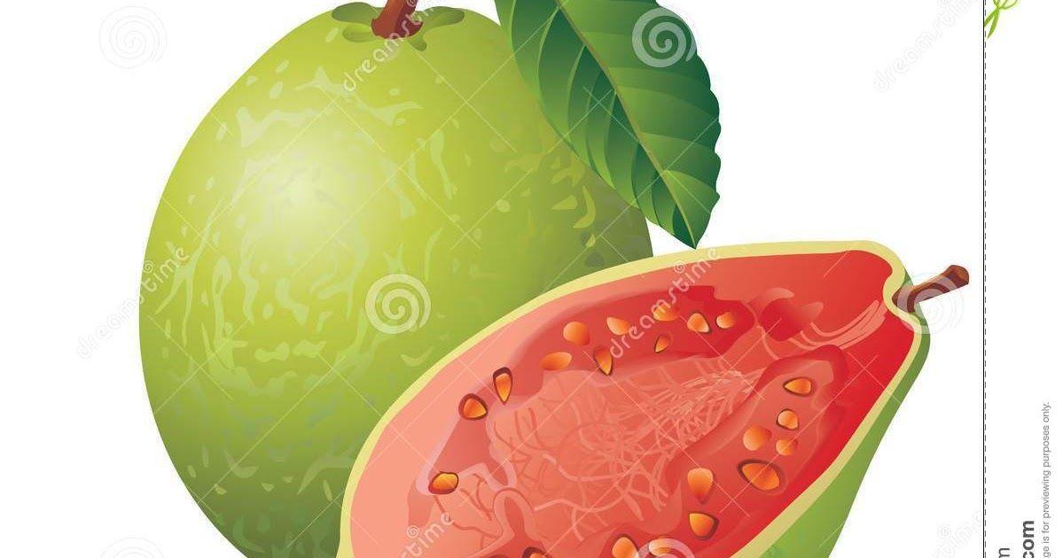 Mewarnai Gambar Buah Jambu Biji Diantaranya Vitamin Serat Pektin Merupakan Serat Larut Mineral Seperti Mangan Dan Magnesium Serta As Warna Jambu Biji Gambar