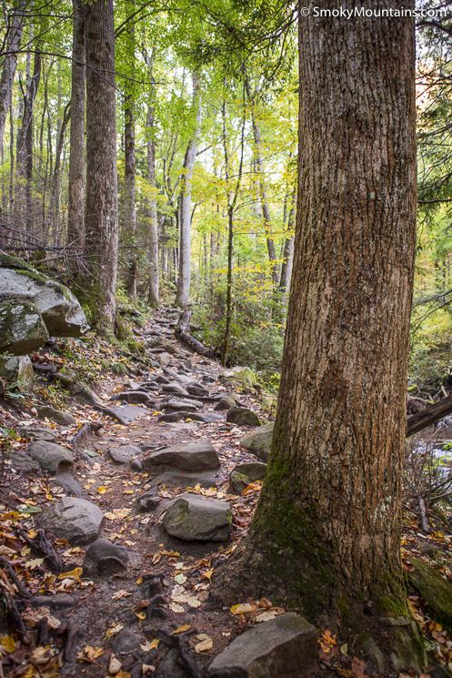 Are you thinking about hiking the Rainbow Falls Trail to Mount LeConte? Check out this great review complete with tips and photos. #rainbowfalls