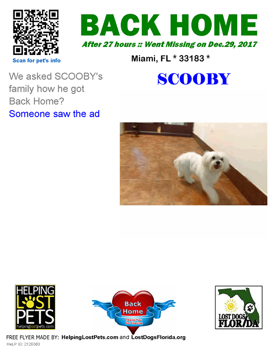 Miami Length Of Time Lost 1 Day Message From Family Someone Saw The Ad Welcome Home Scooby Lostdog Losing A Dog Losing A Pet Happy Tails