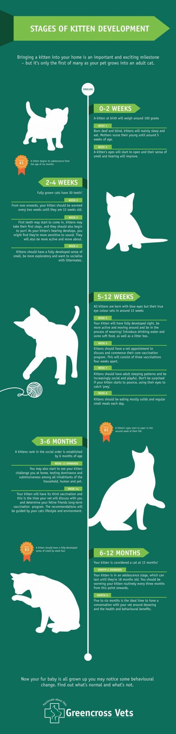Infographic Of The Stages Of Kitten Development Baby Development Stages Development Infograp In 2020 Baby Development Stages Of Baby Development Kitten Care Newborn