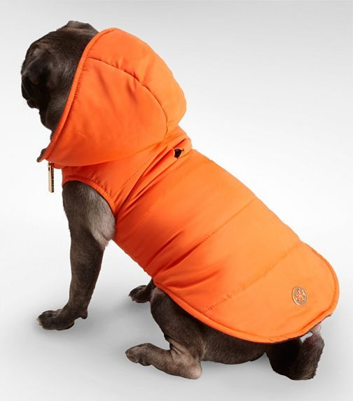 ToryBurch doggie jacket? Yes please