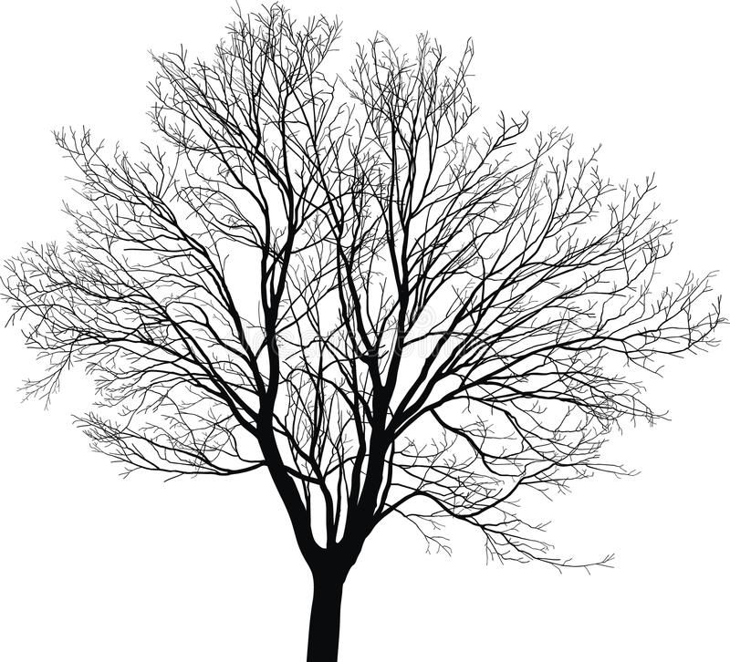 Black And White Picture Of A Tree