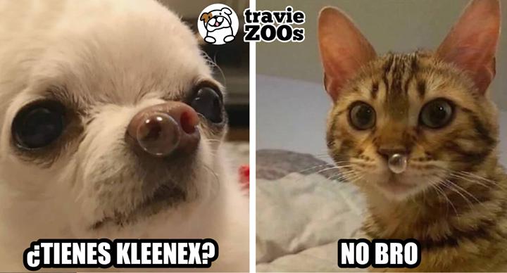 Es Que Con El Frio A Mas De Uno Nos Pasa Meme Gato Animales Frases Perros Graciosos