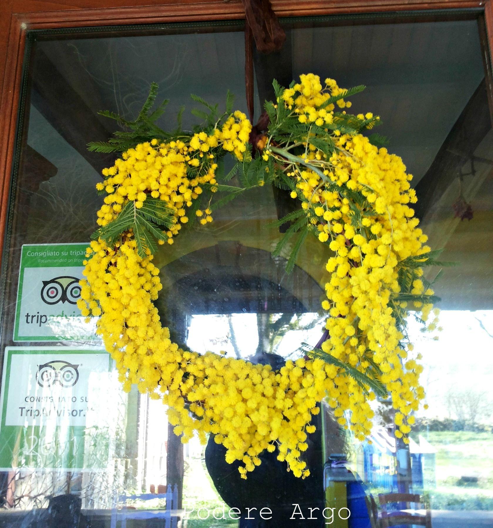 Photo of Ghirlanda fuoriporta di mimosa per la festa della donna – Podere Argo