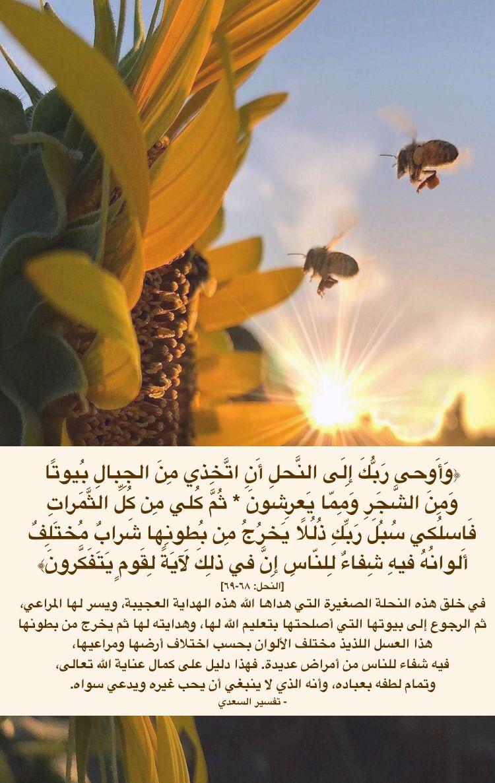 العسل فيه شفاء للناس Hives Healing Tree