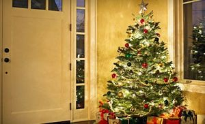 groupon natural christmas trees at mr jingles half off two options available in multiple locations groupon deal price 25