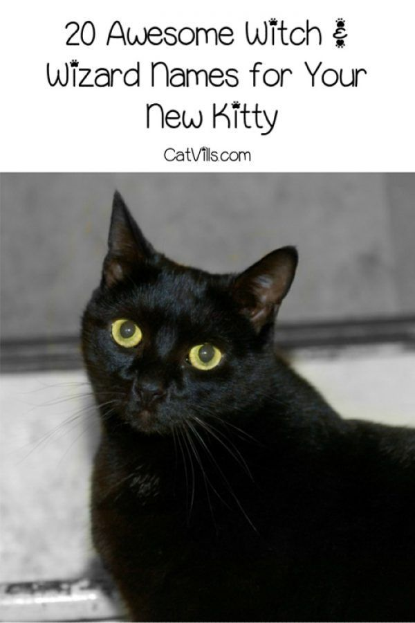 20 Perfect Witch And Wizard Names For Your Cat Catvills Halloween Names For Cats Girl Cat Names Black Dog Names