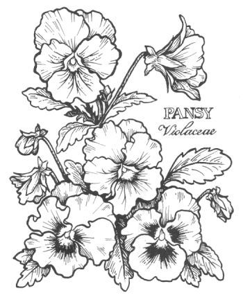 Welcome To Dover Publications Coloring Pages Pansies Flower