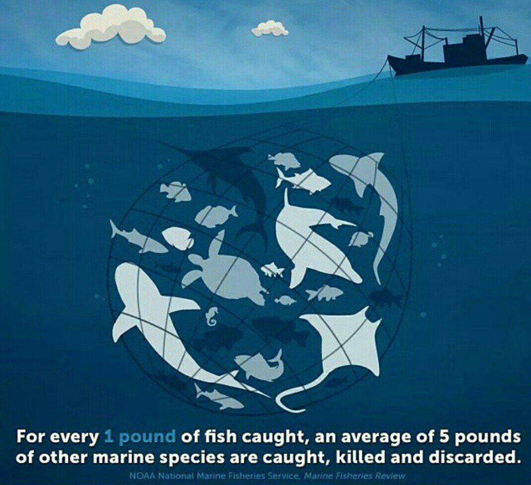 How many animals died for the fish on your plate go for How many fish are in the ocean