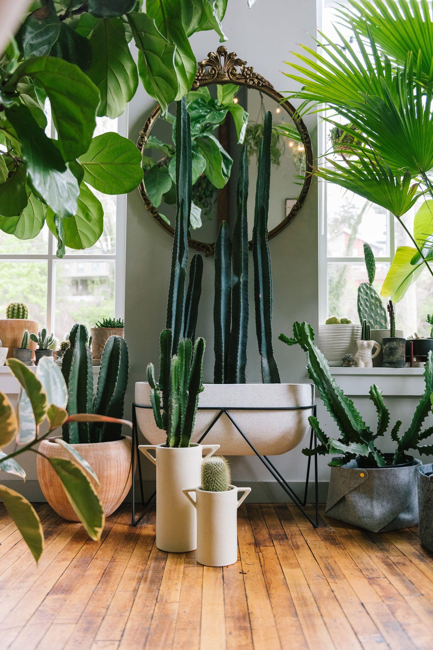 Hilton Carter S Plant Oasis Living Room Plants House Plants Indoor Plant Decor