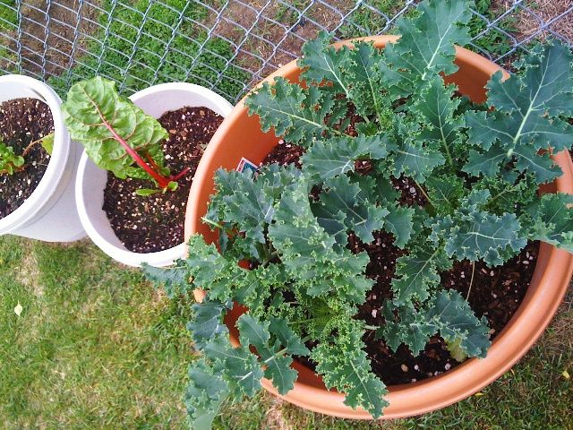 Greenhouse gardening · Tips from my sister Growing Ve ables in Alaska