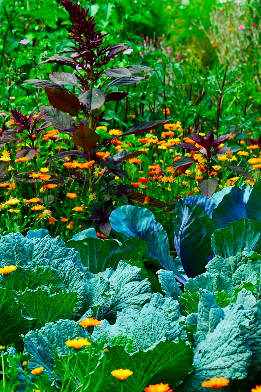 цветы сад огород в контакте