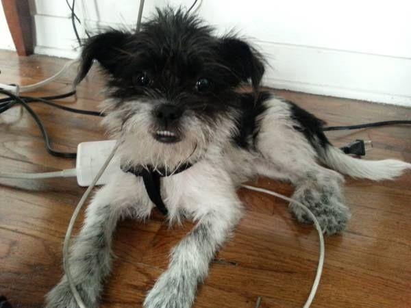 LOS ANGELES, CA FOUND DOG FOUND terrified small black