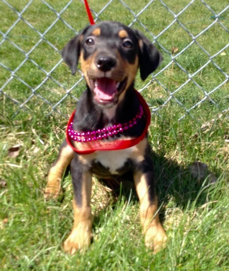 Adopt Shanti ADOPTED!!! on Petfinder Puppy adoption