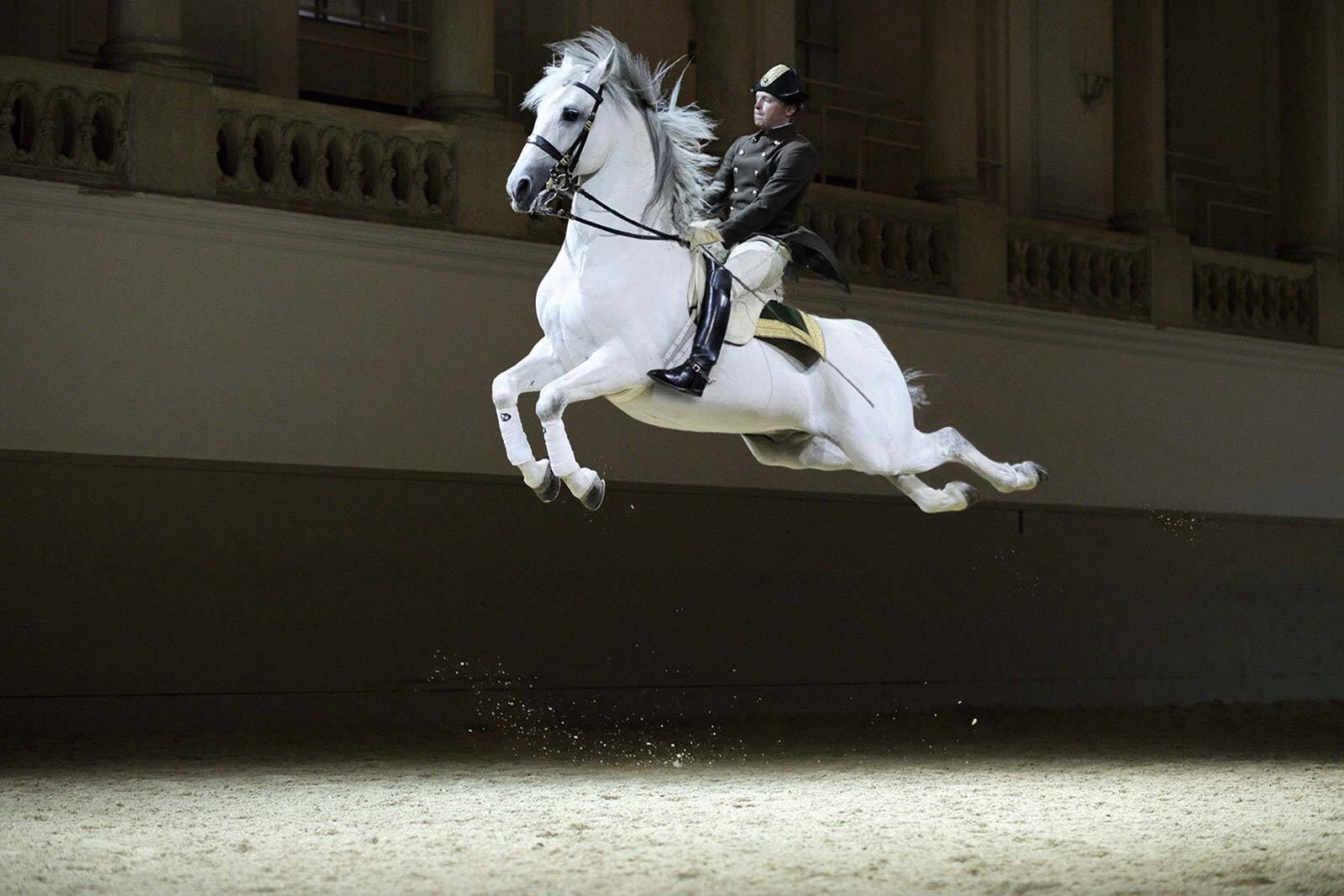 Pin By Kellf Kellf On Equestrian Schools Spanish Riding School Dressage Horses Horses