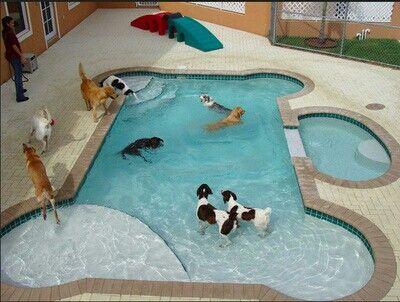Woodshop Plans Dog Pool Dog Swimming Pools Dog Swimming