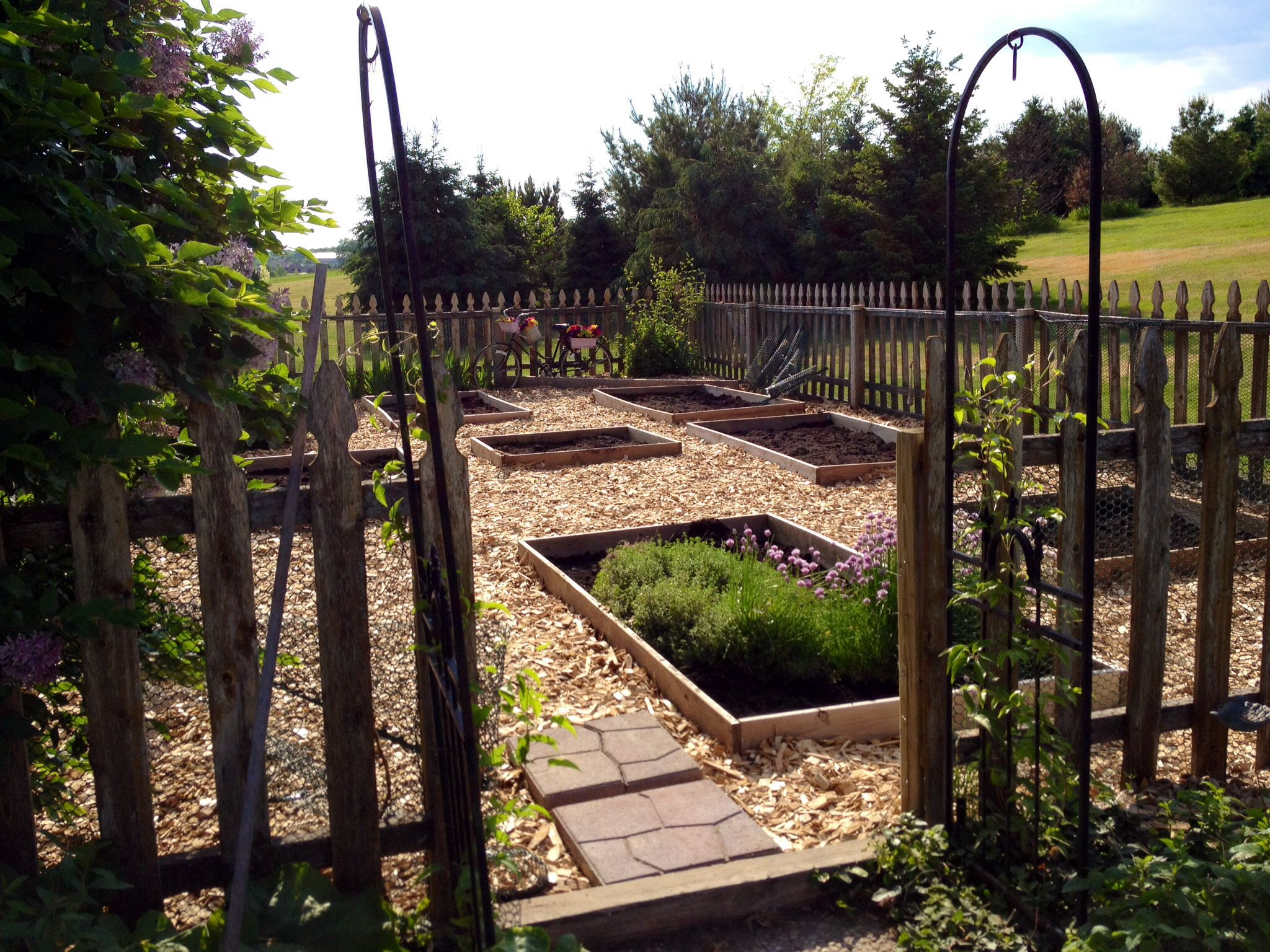 my raised bed garden the entire 20 x 40 space is lined with weed barrier cloth wood chips the. Black Bedroom Furniture Sets. Home Design Ideas