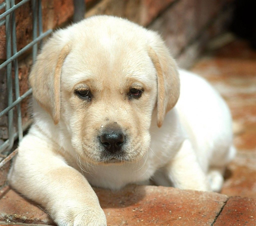 Cute Dog Breeds Small Medium Quoteko Com Free Puppies For Adoption Free Puppies Puppy Adoption