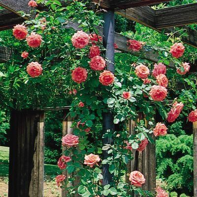Pin On Flower Wishlist