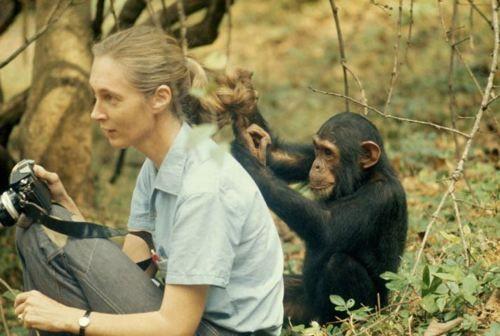 Jane Goodall & friend   Jane Goodall   Pinterest   Jane goodall ...