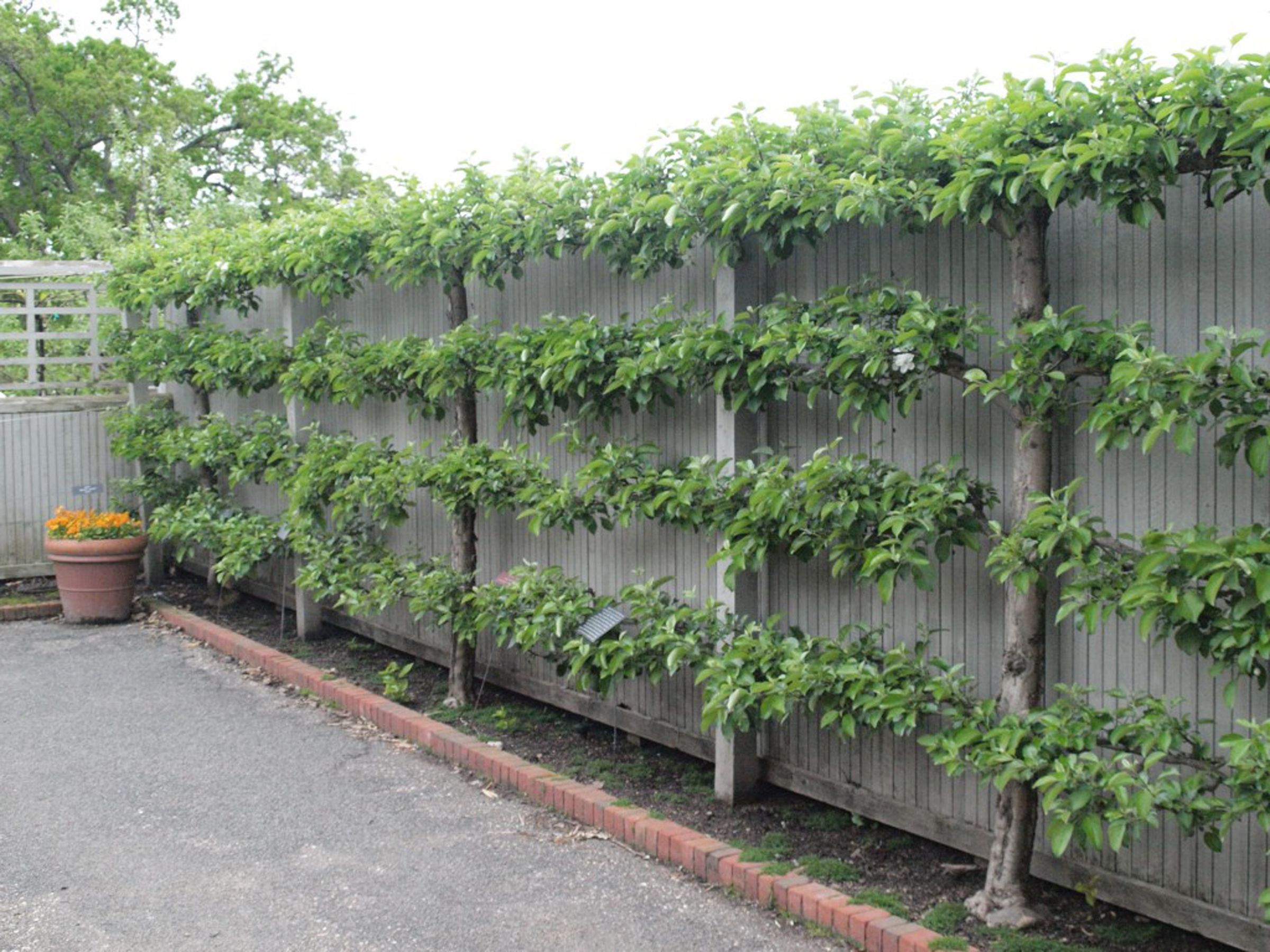 Creative Live Fence Plants Ideas To Block Street View 640 x 480