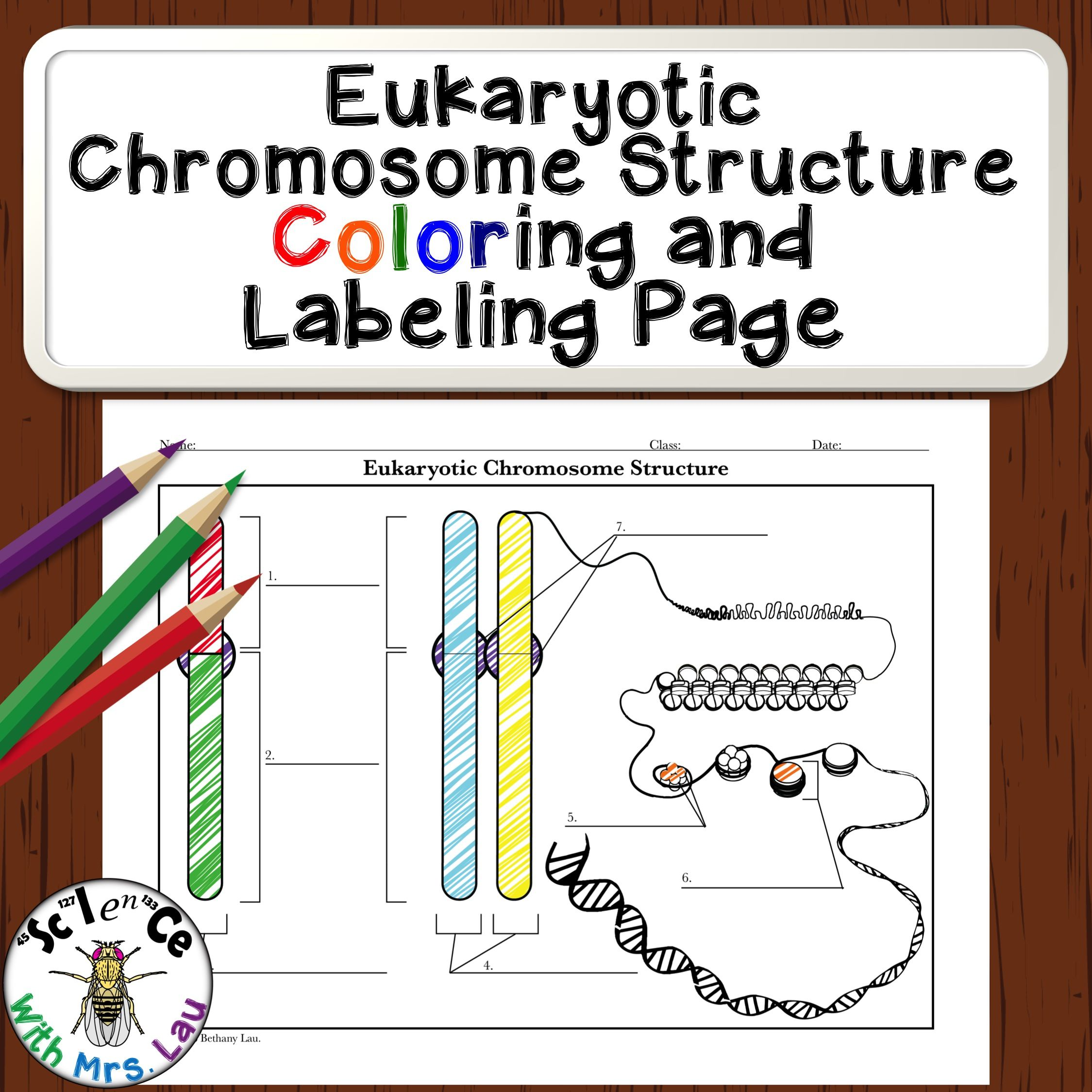 FREE Eukaryote Chromosome Structure Coloring and Labeling